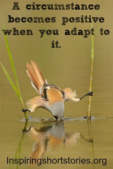 changes - adapt