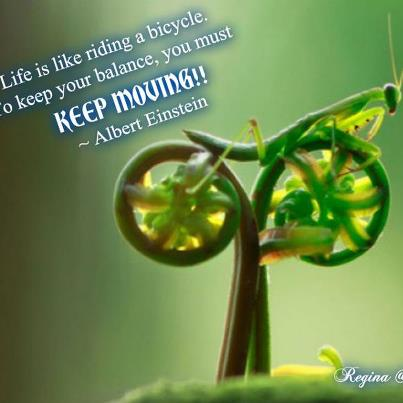 life is like a bicycle