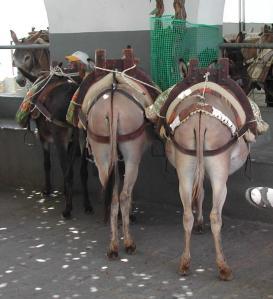 donkey-butt 2