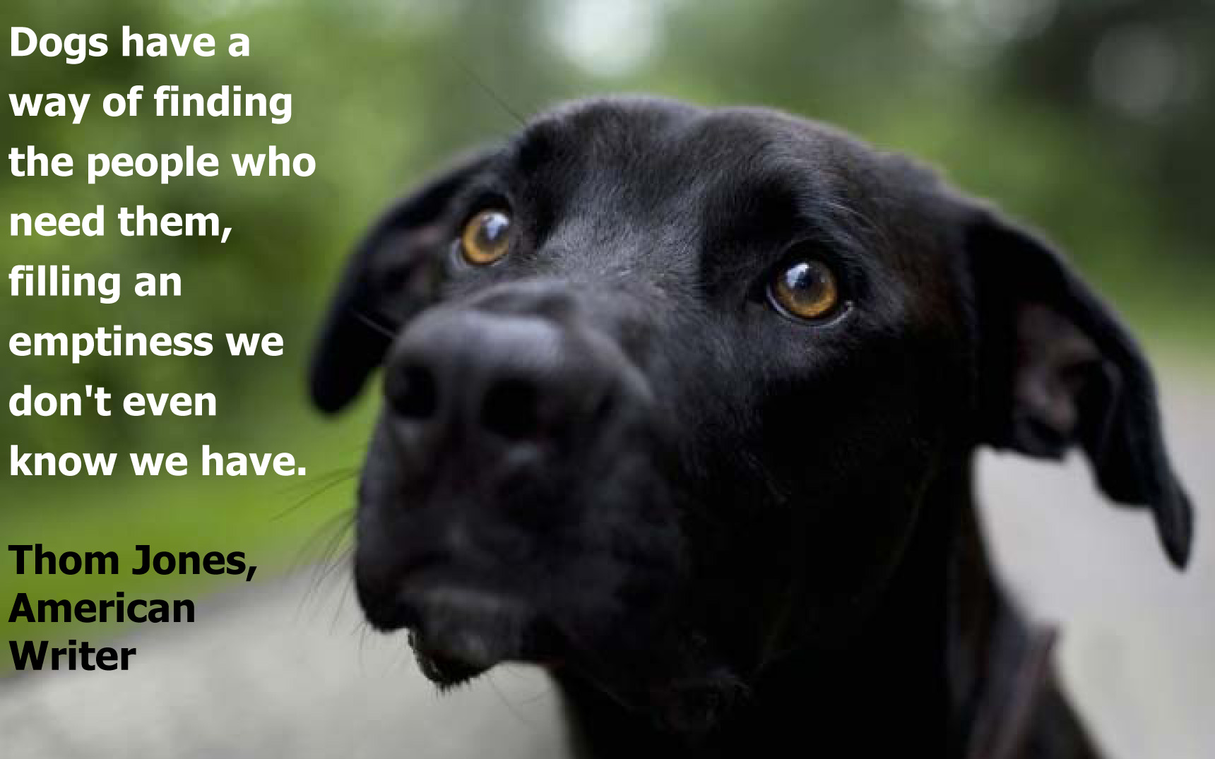 Dog Quotes: All Dogs Go To Heaven…