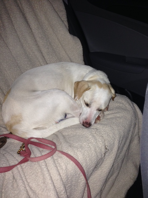 Sound asleep in the car Tuesday night.