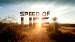 speed of life 2